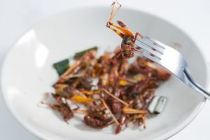 Insects as Primary Protein Source